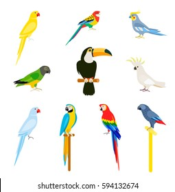 Tropical parrot set with colored feathers and wings. Vector cartoon parrots isolated on white background.