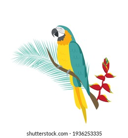 Tropical parrot yellow-blue Macaw sits on a branch with a flower of Heliconia. Tropical plants and parrots. Vector illustration on a white background
