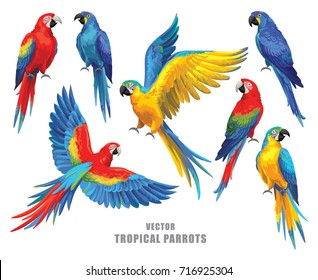 Tropical parrots collection. Vector design isolated elements on the white background.