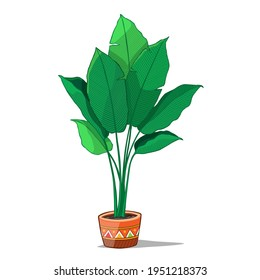 Tropical plant in pot. Vector Illustration.