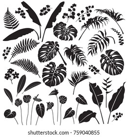 Tropical plant set. Black silhouettes of palm leaves, banana plants, monstera, tropic flowers isolated on white background. Vector flat illustration.