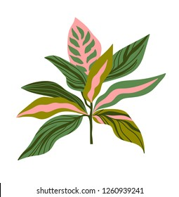 Tropical plant vector print for t-shirt design. Green leaves on the pink background. Vector design element isolated on the white background.