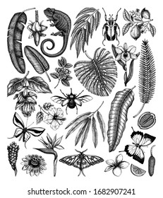 Tropical plants and animals vector collection. Hand drawn exotic flowers, citrus fruits, palm leaves, tropical insects and chameleon. Vintage botanical sketches  for summer or island design templates