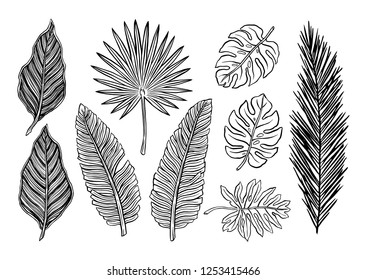 Tropical plants. Vector botanical illustration.