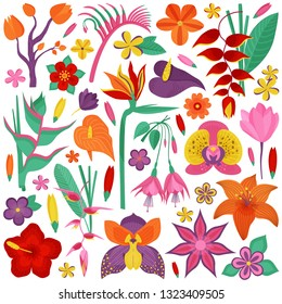 Tropical rainforest flower set. Cartoon exotic flowers and floral branches with leaves. Botanical illustration with exotic plants, wildflowers, brazil tropic botany, Hawaiian paradise plant elements.