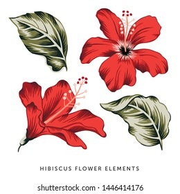 Tropical red hibiscus flowers, green leaves, isolated elements, white background. Vector illustration clip art. Summer beach floral design