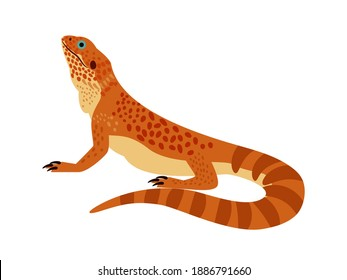 Tropical reptile. Cartoon zoo character, wild orange bearded dragon, vector illustration of terrarium lizard isolated on white background