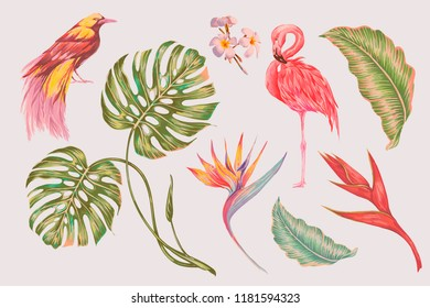 Tropical set collection of exotic flowers, jungle leaves, monstera plant, bird of paradise, pink flamingo, strelitzia flower. Vector vintage illustrations, decorative beauty floral elements isolated
