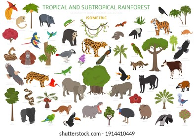 Tropical and subtropical rainforest biome, natural region infographic. Amazonian, African, asian, australian rainforests. Animals, birds and vegetations ecosystem 3d isometric design set. Vector illus