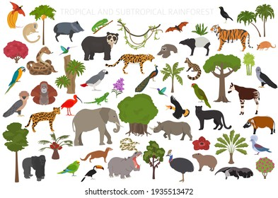 Tropical and subtropical rainforest biome, natural region infographic. Amazonian, African, asian, australian rainforests. Animals, birds and vegetations ecosystem design set. Vector illustration
