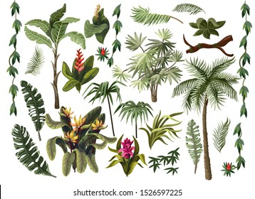 Tropical trees and flowers such as palm, banana, monstera and other isolated.