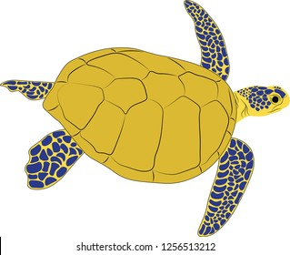 tropical turtile cute animal vector illustration