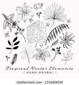 Tropical Vector Elements, Hand Drawn Tropical Plants, Coqui, Monstera, Palm Plant