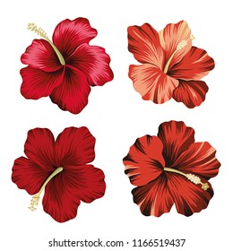 Tropical vintage hibiscus flower clip art. Exotic floral botanical print.