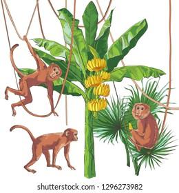 Tropical vintage monkey. Collection of different monkeys, bananas palm trees, leaf, fruits foliage set. Vintage design for banner, textile, wallpaper. Vector watercolor illust