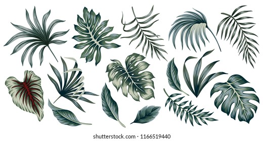 Tropical vintage palm leaves floral clip art. Exotic botanical print.