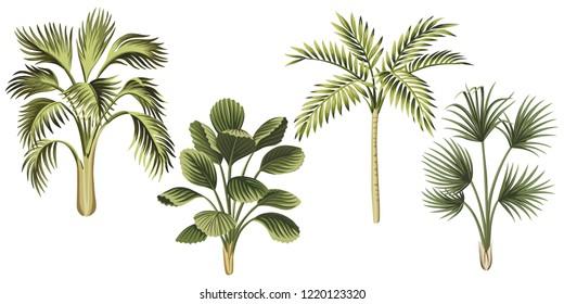 Tropical vintage palm trees floral clip art. Exotic botanical print.