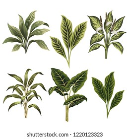 Tropical vintage plants floral clip art. Exotic botanical print.