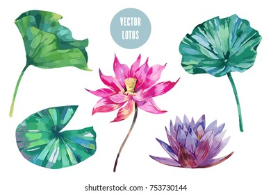 Tropical watercolor flowers, leaves, water lily flower, pink lotus set isolated on white background. Vector collection of botanical illustrations, floral elements