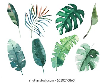 Tropical watercolor leaves set. Vector illustration. Isolated image
