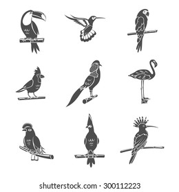 Tropical wild bird black silhouettes icons set isolated vector illustration