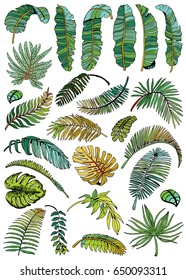 Tropicall Leaves Set. Exotic Leaf Background. Hand Drawn illustration.