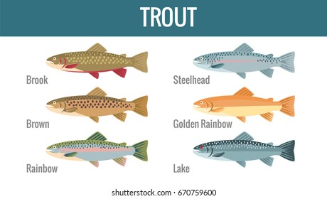 Trout breed- flat vector illustration. Icon for apps, labels and advertising.