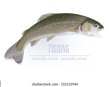 Trout fish - vector illustration