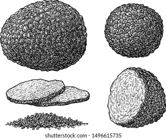 Truffle illustration, drawing, engraving, ink, line art, vector