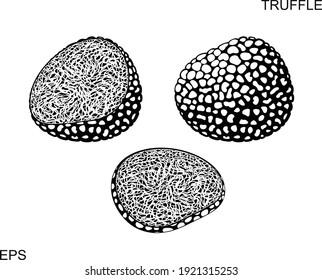 Truffle logo. Isolated truffle on white background