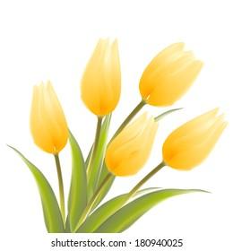 Tulip, floral background. Vector illustration.