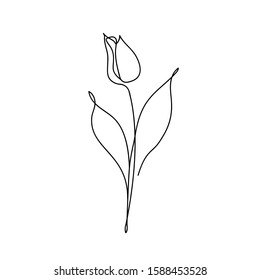 Tulip flower continuous line drawing. Abstract minimal tulip. Editable vector line. Tulip flower icon, logo, label. Doodles in black and white. Illustration. Handwriting.