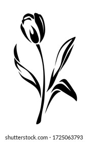 Tulip flower. Vector black and white illustration isolated on white.