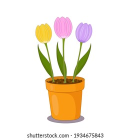 Tulip flowers in a clay pot on white background. Spring plants illustration