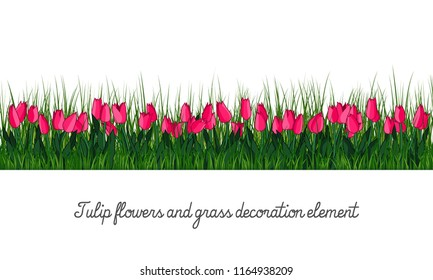 Tulip flowers and grass decoration element, isolated on transparent background, cartoon vector illustration.