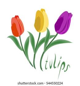 Tulip flowers isolated. Vector illustration