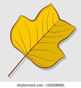Tulip poplar autumn leaf isolated on a white background. Flat design Vector illustration