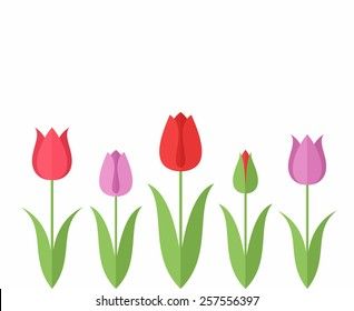 Tulip. Set. Vector illustration