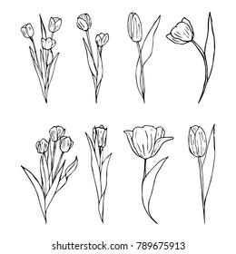 Tulip vector illustration. Doodle style. Design, print, decor, textile, paper