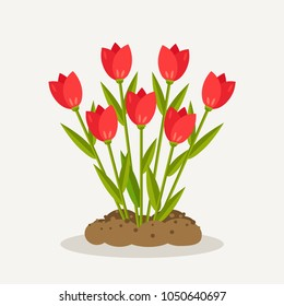 Tulips, red roses, bunch of flowers with heap of dirty, ground isolated on white background. Floral bouquet, plant with blossom and leaf. Summer garden, spring forest. Vector flat design
