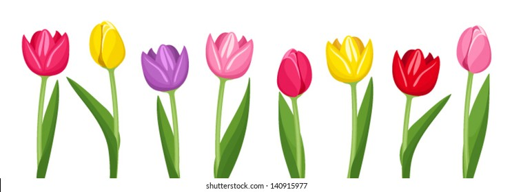 Tulips of various colors. Vector illustration.