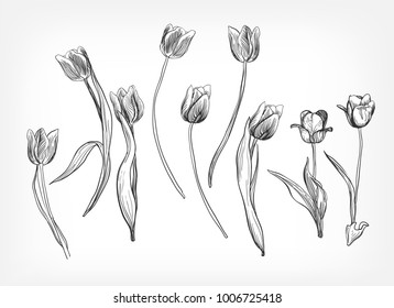 tulips vector design elements simple