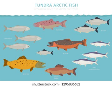 Tundra biome. Terrestrial ecosystem world map. Arctic fish infographic design. Vector illustration