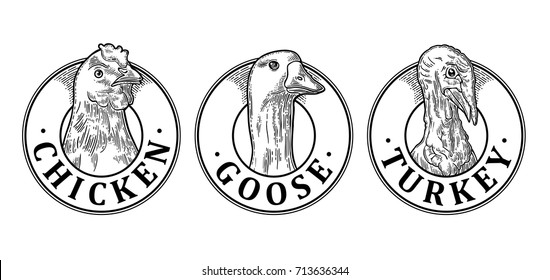 Turkey, Chicken and Goose head with lettering. Hand drawn in a graphic style. Vintage black vector engraving illustration for label, poster, logotype. Isolated on white background
