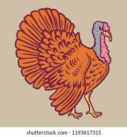 Turkey cock icon. Hand drawn illustration of turkey cock vector icon for web design