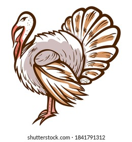 Turkey hand drawn icon. Thanksgiving day symbol. Domestic bird. Barnyard fowl. Livestock, farmyard. Poultry, meat production. Vector zoology illustration isolated on white background.