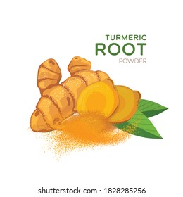Turmeric root with green leaves isolated on white background vector illustration