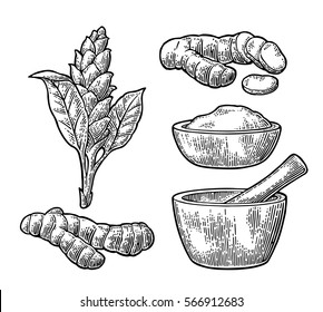 Turmeric root, powder and flower with pestle and mortar. Hand drawn vector vintage engraved illustration. Isolated on white background