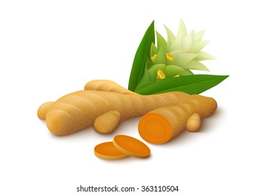 Turmeric root with slices, leaves and flower isolated on white background. Realistic vector illustration.