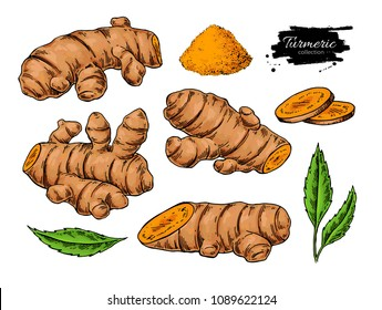 Turmeric root vector hand drawn illustration.  Curcuma, powder, leaf and sliced pieces drawing. Natural flavor. Herbal spice sketch. Detox food ingredient.